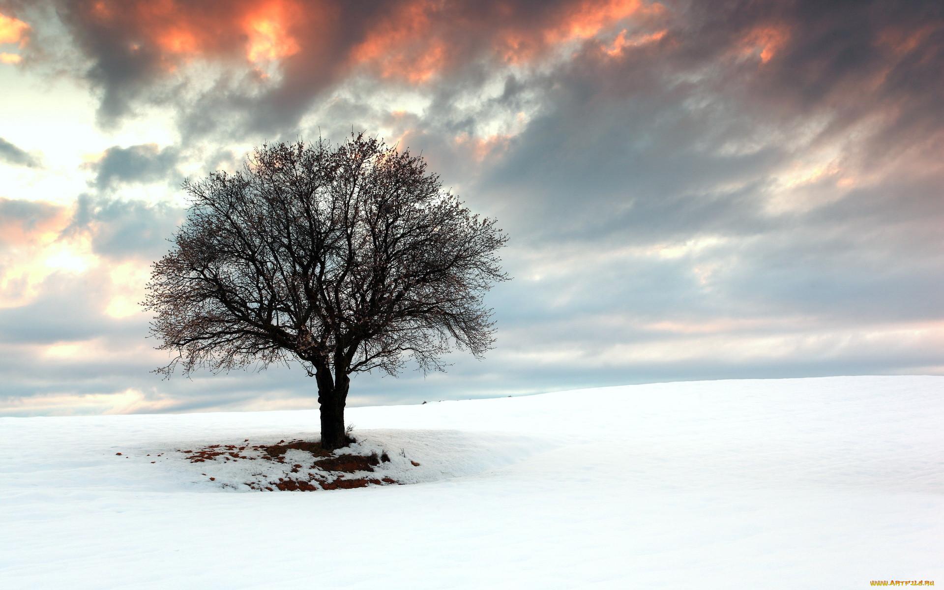 Картинки одиноко стоящего дерева